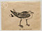 Lucian Freud 'A Peculiar Gull' 1944 Ink on Paper 12.7cmx17cm
