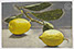 "Lucian Freud ""Lemon Sprig""  1947  Oil on Board  15.2cm x 23.5cm"