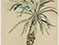 Lucian Freud 'Palm Tree' 1942 Pastel, Chalk and Ink on Paper 61.5cmx43.5cm
